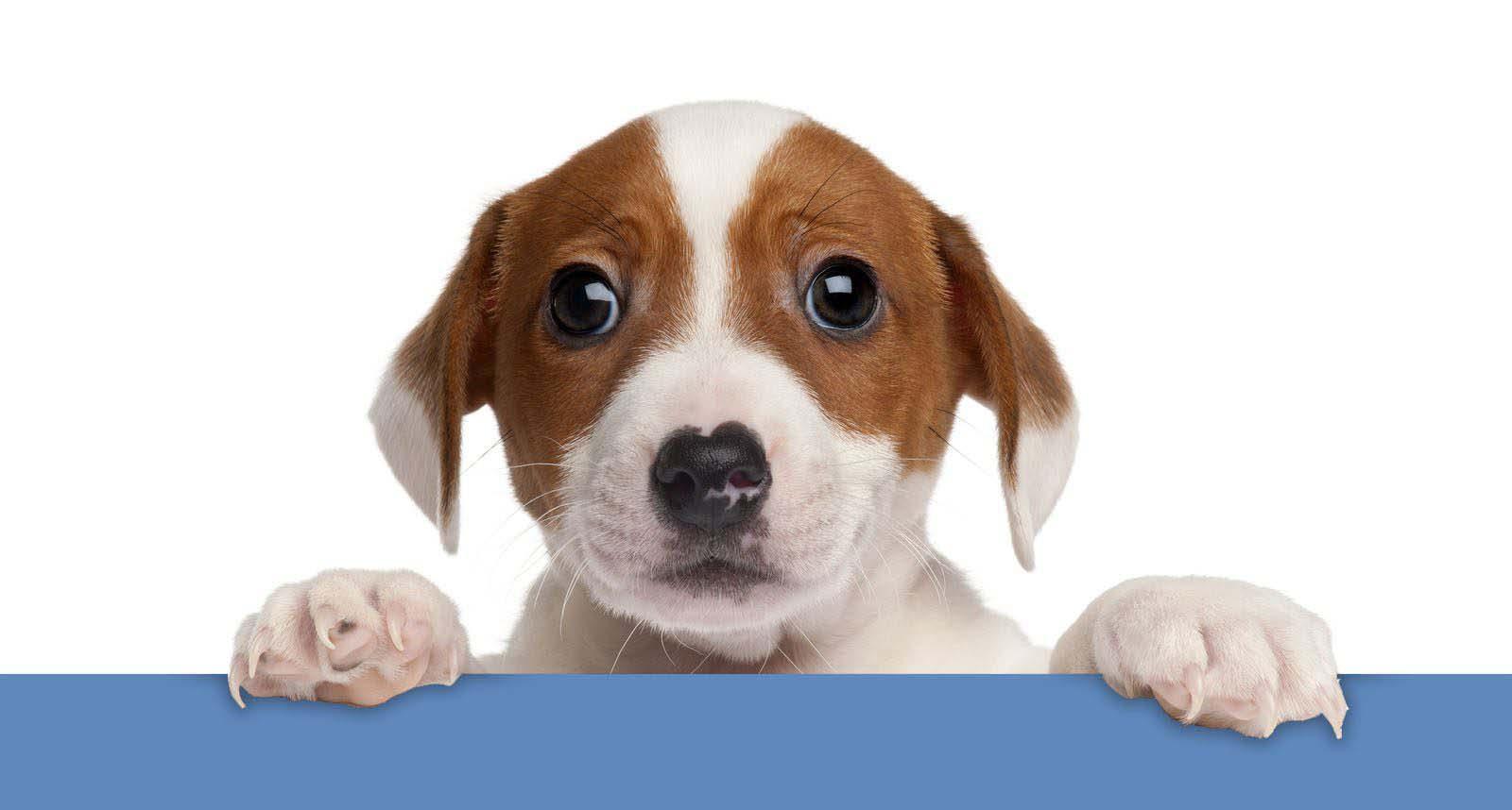 Image of a sad dog holding a sign
