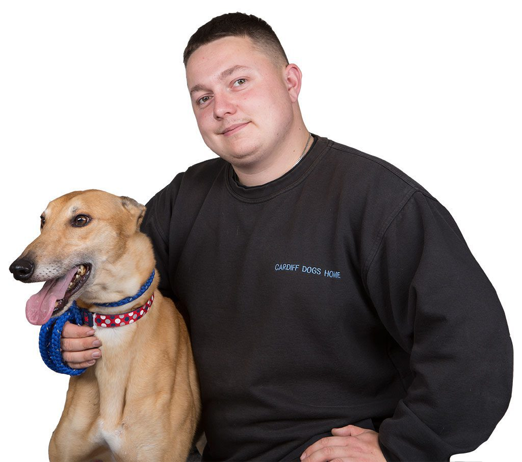 Cardiff dogs home staff