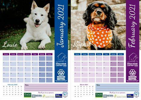 Dogs home calendar 2021